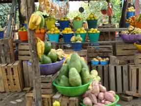 Fruit stand in Nayarit Mexico. Big green fruit is Yaka